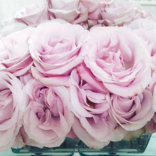 Always in the mood for pink roses.
