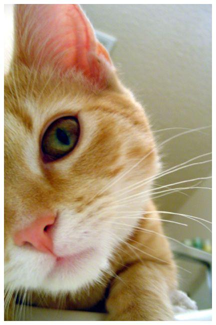 cat by niqole-lee.deviantart.com on @deviantART