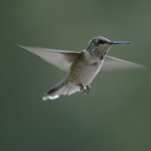 Hummingbirds have specific housing requirements.