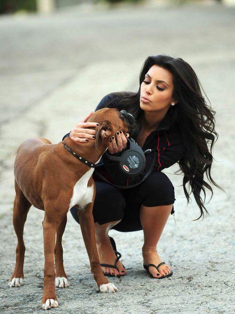 Boxer Dog Breed Information - akc.org