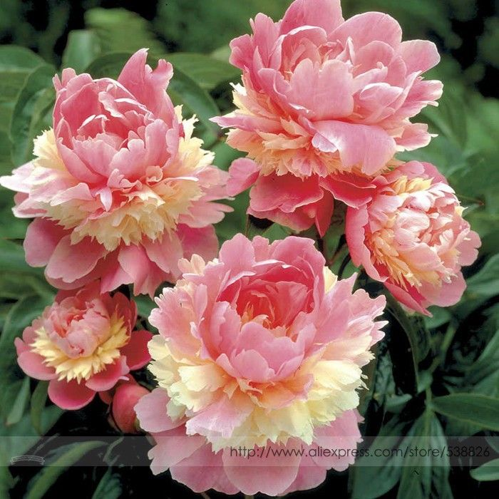 Common Garden Flowers Pink 609 best flowers u like images on pinterest | flowers, plants and