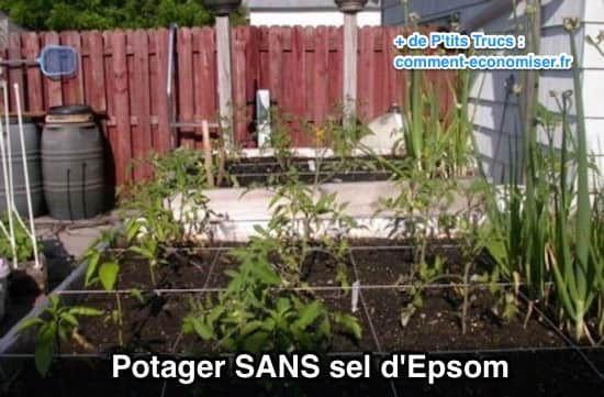 Voici Pourquoi J'utilise du Sel d'Epsom Dans Mon Jardin et Mon Potager.