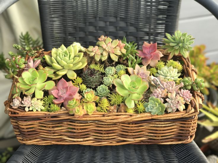 Basket full of succulents..