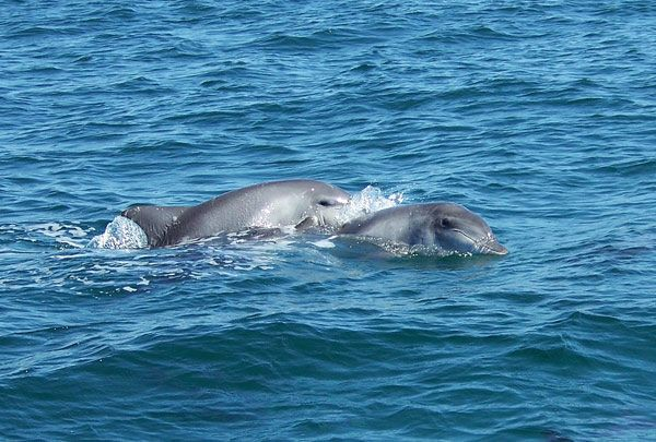 #Dolphins in #plett #plettitsafeeling #whales #bucketlist