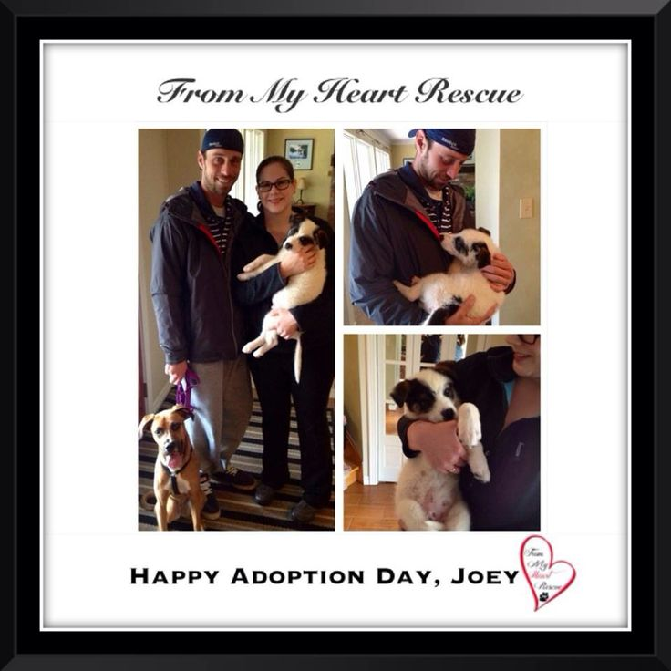 #Please ❤️+ #Pin #FromMyHeartRescue #RescueWithoutBorders #SavingOneDogAtaTime ~ #Happy #Adoption #Day #Joey *Many thanks to Monika, Susan, Lee Anne and family for all their hard work behind the scenes. *Thank you❤️ *Info, Foster, Adoption, PayPal & e-transfer: frommyheartrescue@hotmail.com *Our Vets: Brock St. Animal Hospital/FMHR 905-430-2644 *Fundraising & Volunteering: FMHRfundraising@hotmail.com    *www.frommyheartrescue.com  *Find Us: Petfinder, FB, Twitter, Instagram, YouTube…