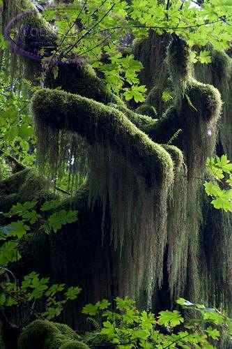 spanish moss trees