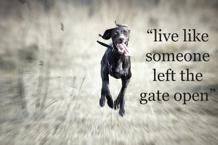 Perfect!: Stay Safe, Loose Dog, Pet, Pup Stay, Running Dogs, Darling Dogs, Happy Dogs, Walk, Photo