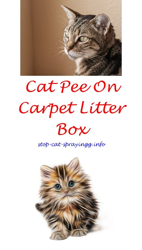 Cat repellent spray for plants.Raid flea carpet and room spray cats.Natural spray to kill fleas on cats - How To Stop Cat Spraying?
