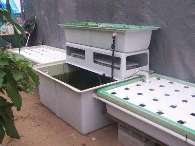 Floating raft aquaponics gardening pinterest for Hydroponic raft system design
