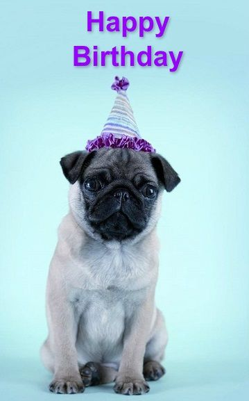 "Pug Birthday Card ! From your friends at phoenix dog in home dog training""k9katelynn"" see more about Scottsdale dog training at k9katelynn.com! Pinterest with over 18,000 followers! Google plus with over 119,000 views! You tube with over 350 videos and 50,000 views!!1900 plus on Twitter!!"