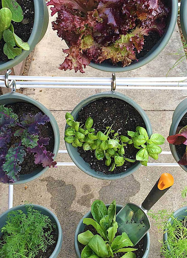 Always wanted to learn how to plant a vertical garden? Click in for easy-to-follow steps! Grow plants, herbs and vegetables in pots that hang from an expandable rack. These gardens are great for small spaces and even create privacy.