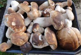 Jak uchovat houby na zimu | recept na nakládané houby