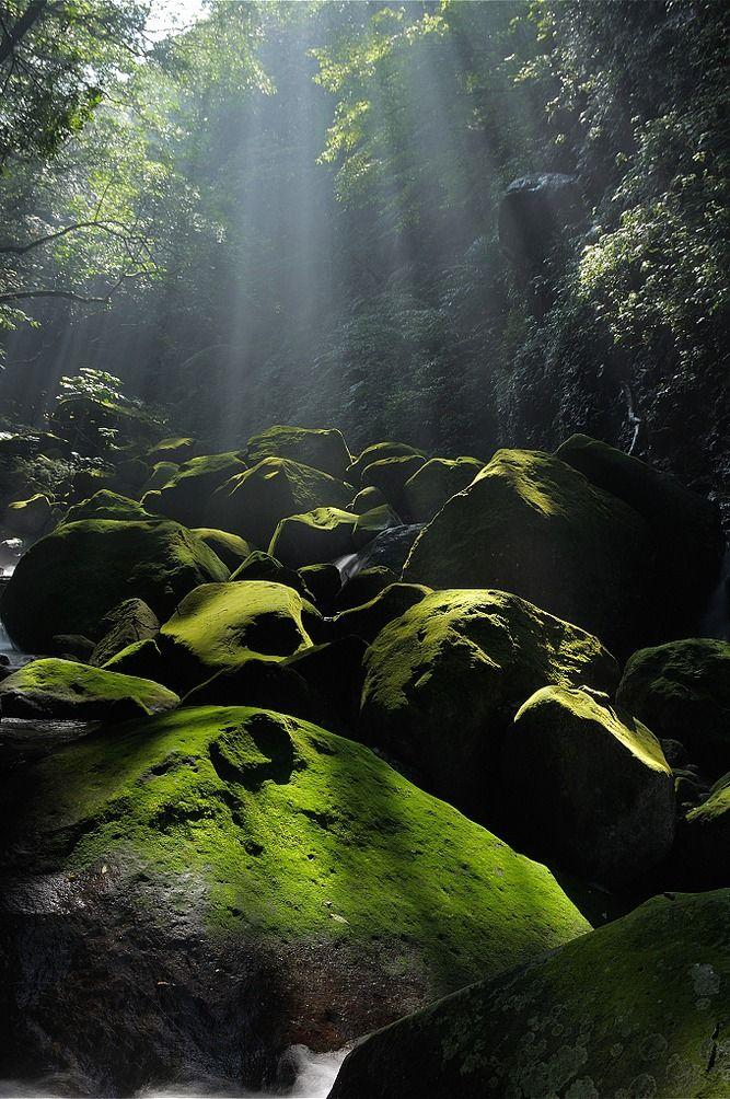 natuur | zonlicht