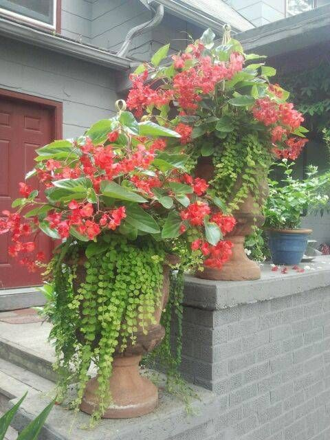 Shade Plants Container Pots