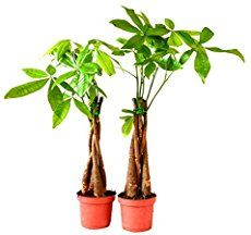 how to grow money tree in sims 3