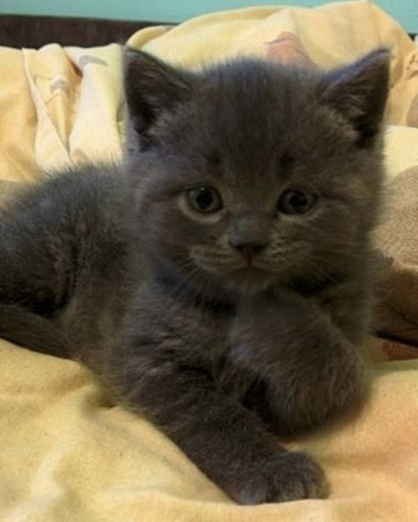 Yes, I am very cute !! #cat #cats #kittens