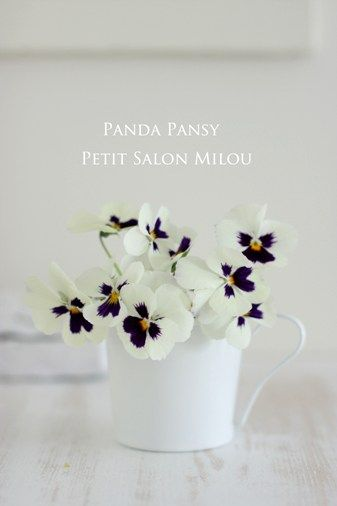 Panda Pansy turn into w/colour