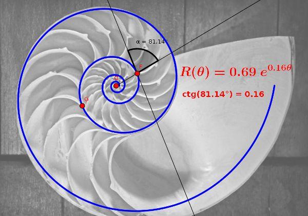 Espiral logarítmica dibujada sobre una concha de Nautilus