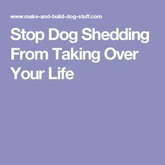 Stop Dog Shedding From Taking Over Your Life