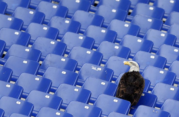 Lazio's mascot, a white headed eagle called Olimpia, lands in the stands before the start of the Italian Serie A soccer match against Napoli at the Olympic stadium in Rome January 18, 2015. REUTERS/Alessandro Bianchi (ITALY - Tags: SPORT SOCCER TPX IMAGES OF THE DAY)                                     via @AOL_Lifestyle Read more: http://www.aol.com/article/2016/05/02/this-2-headed-dragon-eating-in-unison-with-itself-is-the-trippie/21369107/?a_dgi=aolshare_pinterest#slid...
