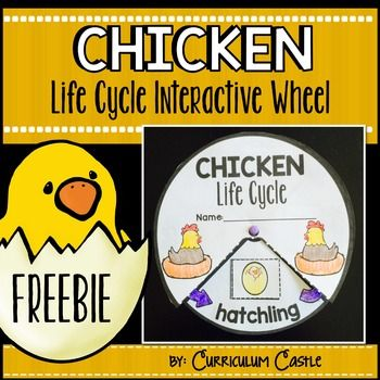 Chicken Life Cycle Interactive Wheel Craft FREEBIE!