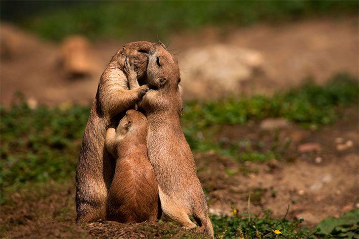 УЗНАЛ САМ  -  РАССКАЖИ ДРУГОМУ!: Животные поцелуйчики (21 фото)