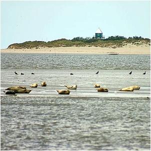 A la découverte des îles Wadden à Schiermonnikoog (NL)
