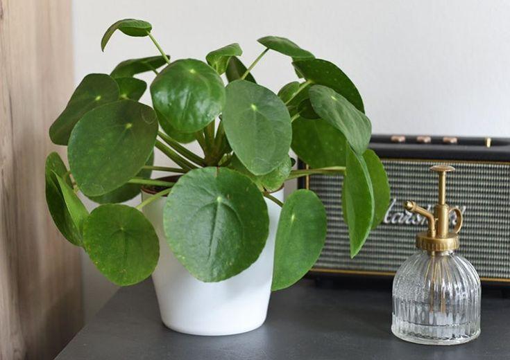 Arredare con le piante: le 5 piante d'appartamento a prova ...