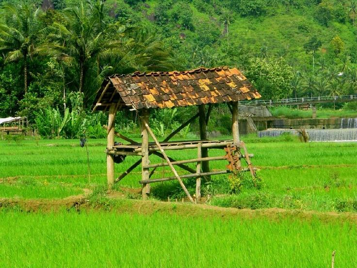 gubuk di sawah desa yang asri | Pacitan, Indonesia
