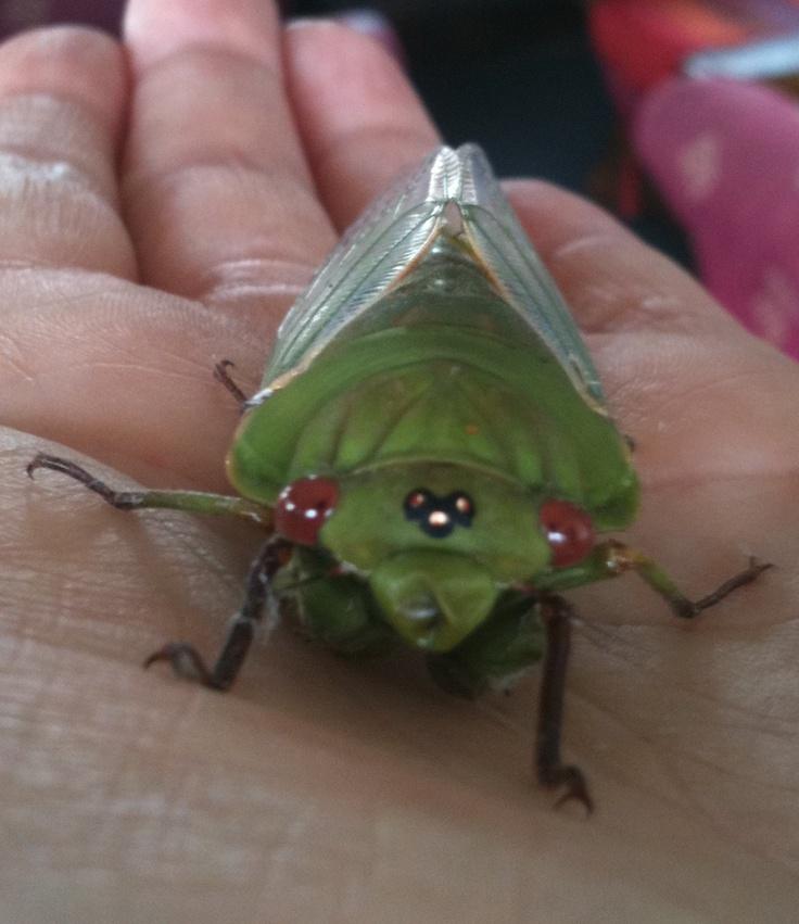 Friendly cicada !!