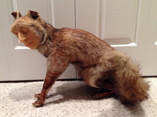 SALE - Vintage Taxidermy Fox Mount with Wax Face - 1