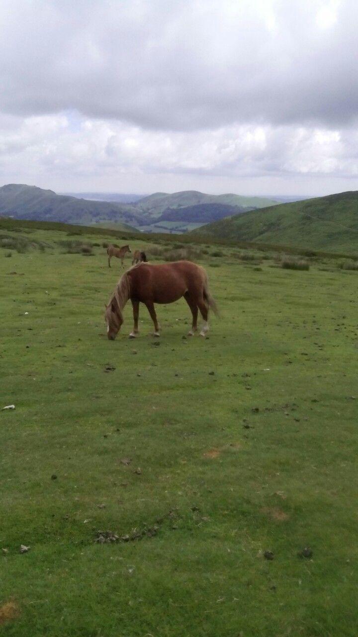 Gorgeous horses on long mynd hills