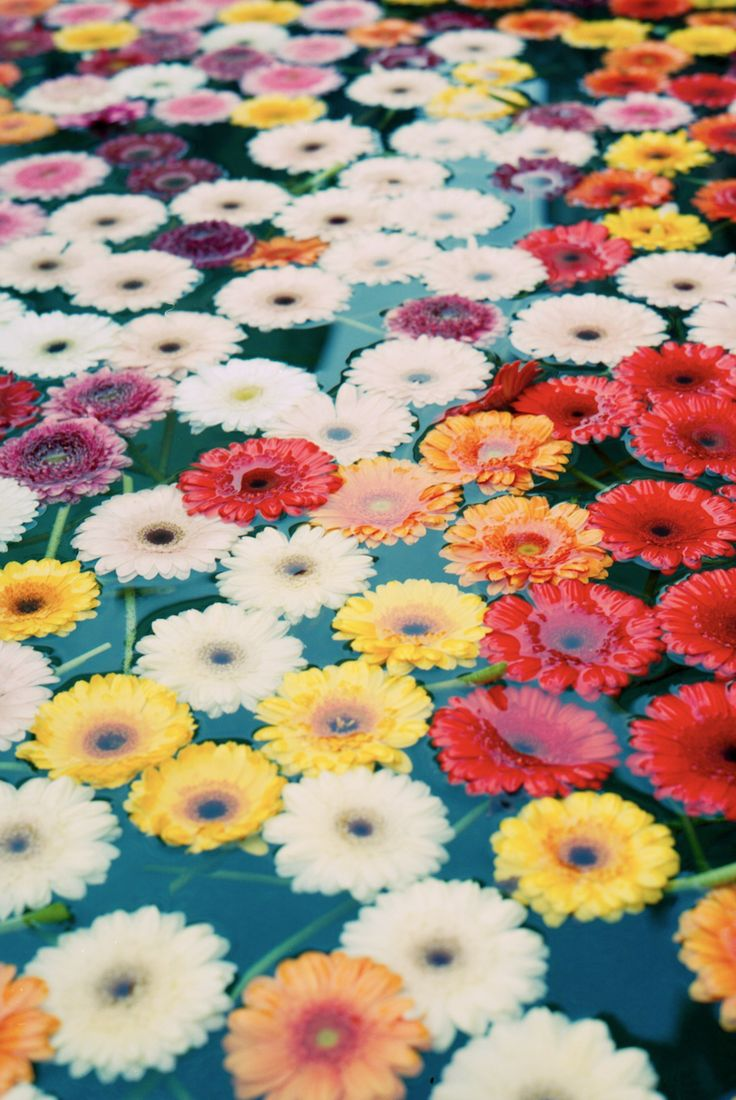 The best images about flowers bloemen on pinterest