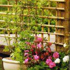 como-hacerplantasverticales -un-enrejado-de-bambu-01
