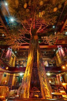 Clifton's Cafeteria. Los Angeles, California. This 4 story restaurant, bar, and shop was just recently renovated. Walt Disney was inspired by Clifton's decor for Disneyland. The most unique place I've been.