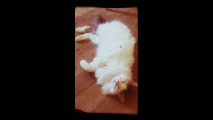 Trinsessa & Kärpänen.  Cat <3