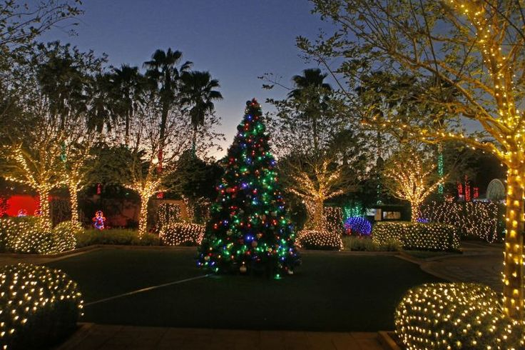 A Christmas tree is the centerpiece in a display of lights in the Wedding Garden in the Florida Botanical Gardens JIM DAMASKE | Times