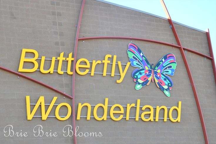 Butterfly Wonderland {Arizona Family Fun}   Best day ever!  Even with a quick change of clothes for a sick child.