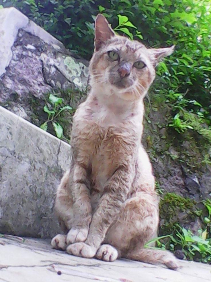 Uli lives in a village near Bogor, Indonesia. It is rural and covered with dirt roads. He brings home sick, injured cats and kittens from garbage disposal, traditional markets, schools, streets and parking lots.