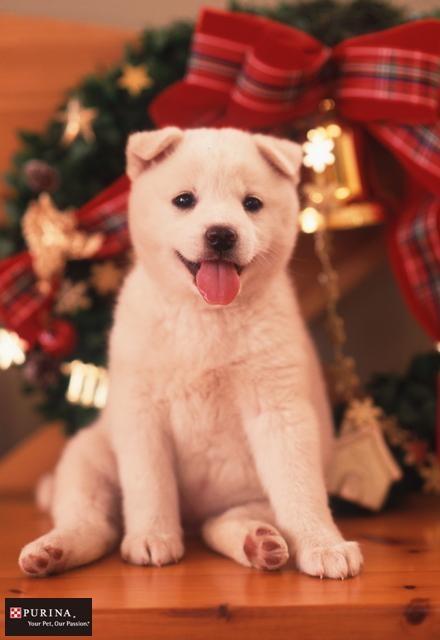 プレゼント待ってるワン♪/犬 イヌ dogs  (ネスレ日本)
