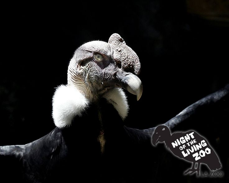 Here's another chance to win 2 tickets to the Night of the Living Zoo…where the Los Angeles Zoo and Botanical Gardens is transformed into a Halloween-themed evening of hair-raising effects, ghouls, ghosts, & other macabre delights. http://www.pinterest.com/TakeCouponss/la-zoo-coupons/ La zoo coupons