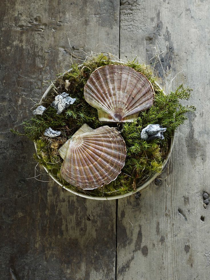 Fäviken  Scallops Cooked Over Burning Juniper Branches  Photo by Eric Olsson  Courtesy Phaidon