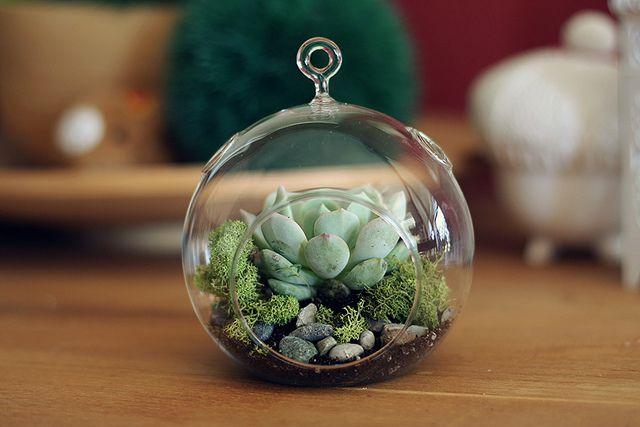 terrariumGlobes, Plants, Easy Wedding Favors, Succulents Terrarium, Favors Ideas, Glasses Plantingnatur, Glasses Christmas Ornaments, Sweets Succulents, Diy Succulents