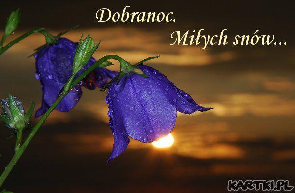 Dobranoc Strona 30 Klub Senior Cafe Flowers The Dreamers Flower Wallpaper