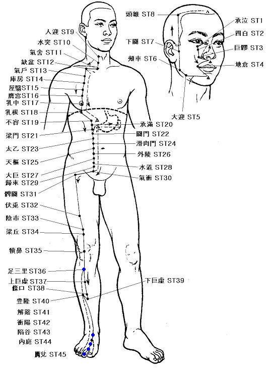 Meridiano del estómago