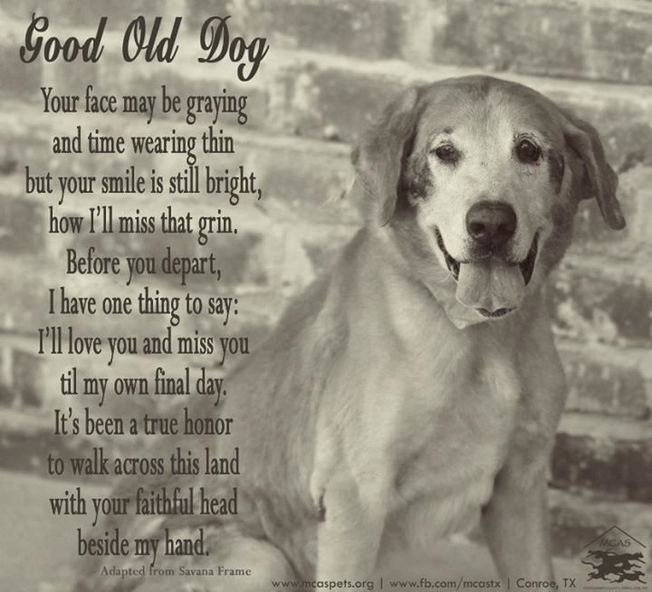 Loss Of Pet Quotes For Dogs: Best 25+ Dog Poems Ideas On Pinterest