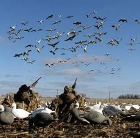 snow goose hunting photography | Proven spring snow geese, greater snow provides fully guided can ...