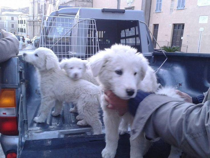 Appello del vice sindaco Bacciardi contro l'abbandono dei cani. Bacciardi: «Il 9 aprile abbiamo ritrovato 5 cuccioli in località Turchina e ora affidati al canile comunale»