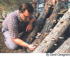 Grow Your Own Mushrooms    http://www.motherearthnews.com/Organic-Gardening/2004-10-01/Grow-your-own-Mushrooms.aspx
