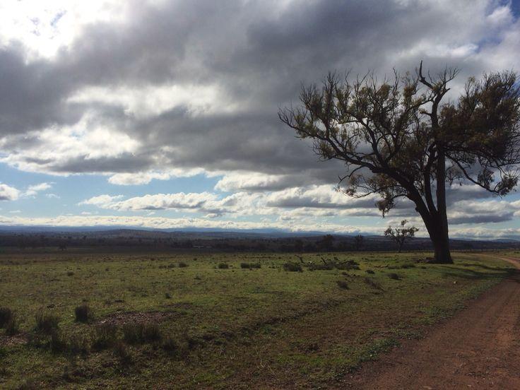 Mudgee NSW